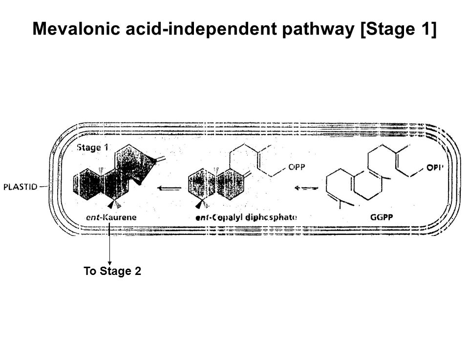 Mevalonic acid-independent pathway [Stage 1]